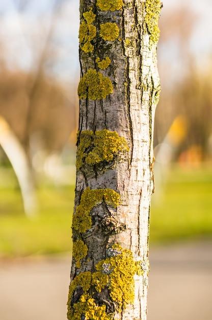 Close-up shot van een boomstam met korstmossen en mos Gratis Foto