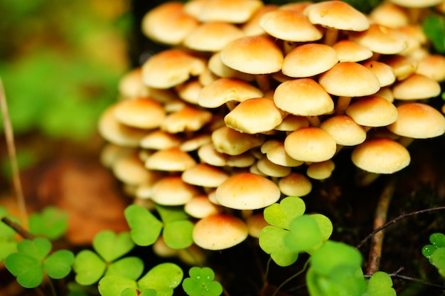 Close-up shot van een bos van champignons met klaverblaadjes Gratis Foto