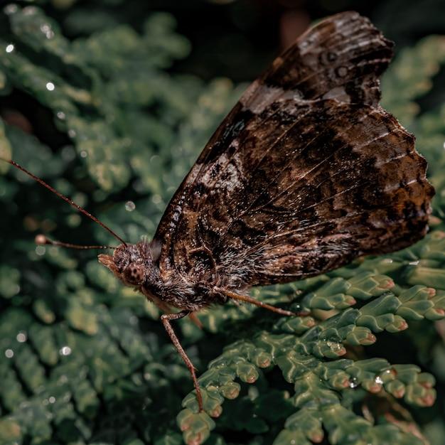 Close-up shot van een bruine vlinder op een groene plant Gratis Foto