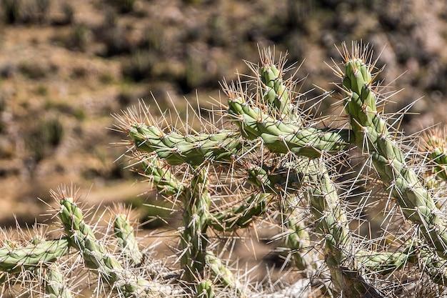 Close-up shot van een cactus met spikes en onscherpe achtergrond Gratis Foto