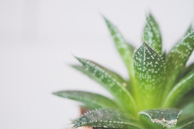 Close-up shot van een groene aloë vera plant in een keramische bruine pot Gratis Foto