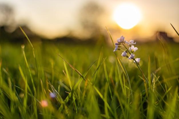 Close-up shot van een kleine bloem groeit in vers groen gras met een onscherpe achtergrond Gratis Foto