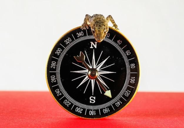 Close-up shot van een kleine hagedis aan de bovenkant van het kompas Gratis Foto