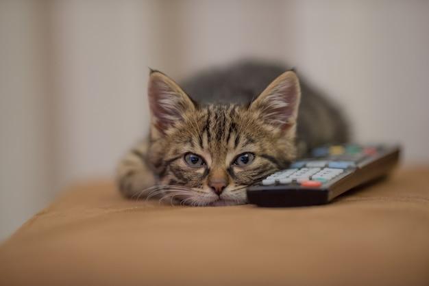 Close-up shot van een kleine kitten slapen naast een afstandsbediening op de bank Gratis Foto