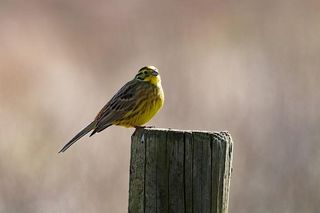 Close-up shot van een kleine vogel zitstokken op droog hout Gratis Foto