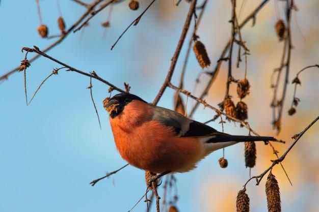Close-up shot van een kleine vogel zittend op een stuk van een tak onder een blauwe hemel Gratis Foto