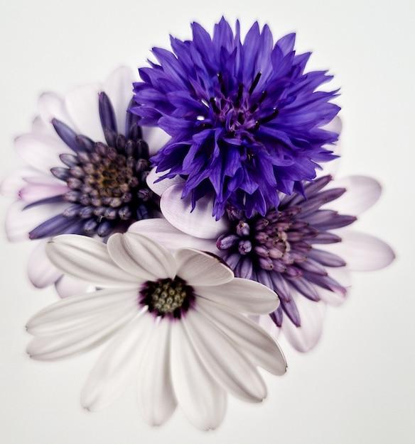 Close-up shot van een mooi bloemenboeket geïsoleerd op een witte achtergrond Gratis Foto