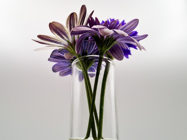 Close-up shot van een mooi bloemenboeket in een glazen vaas geïsoleerd op een witte achtergrond Gratis Foto