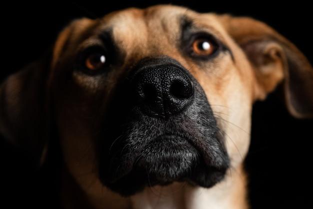 Close-up shot van een mooie bruine binnenlandse hond op een zwarte afstand Gratis Foto