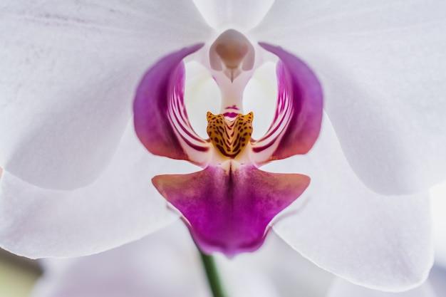 Close-up shot van een mooie witte en roze orchideeën Gratis Foto