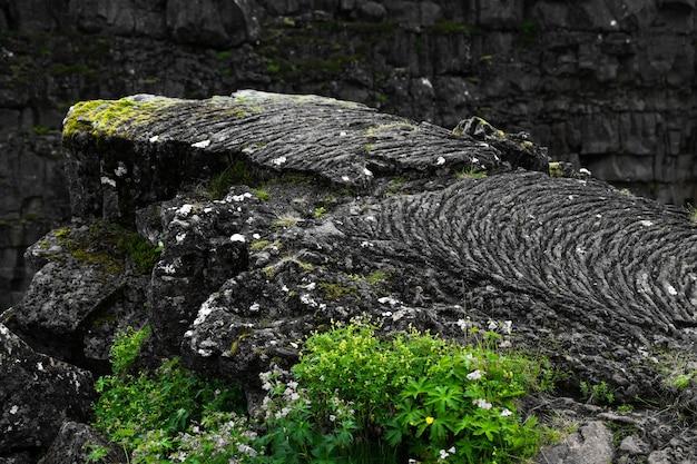 Close-up shot van een rotsachtige klif bedekt met mos op een onscherpe achtergrond Gratis Foto
