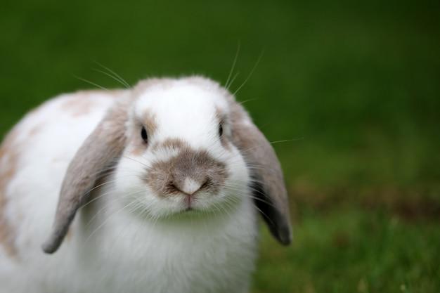 Close-up shot van een schattig konijn op het groene gras met een onscherpe achtergrond Gratis Foto