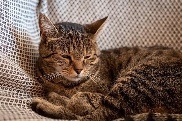 Close-up shot van een schattige grijze kat liggend op de hangmat Gratis Foto