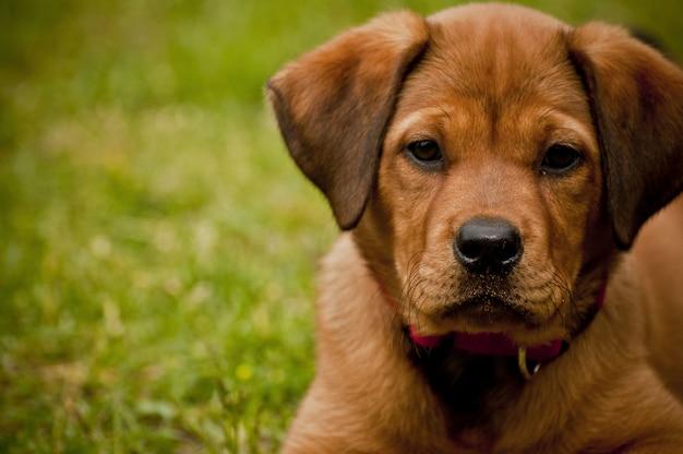 Close-up shot van een schattige hond tot op een grasveld Gratis Foto