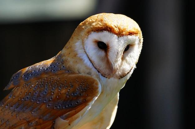Close-up shot van een schattige witte en bruine uil op een onscherpe achtergrond Gratis Foto