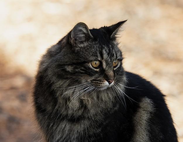 Close-up shot van een schattige zwarte binnenlandse langharige kat Gratis Foto