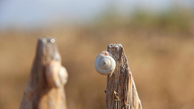 Close-up shot van een slak op een stuk hout Gratis Foto