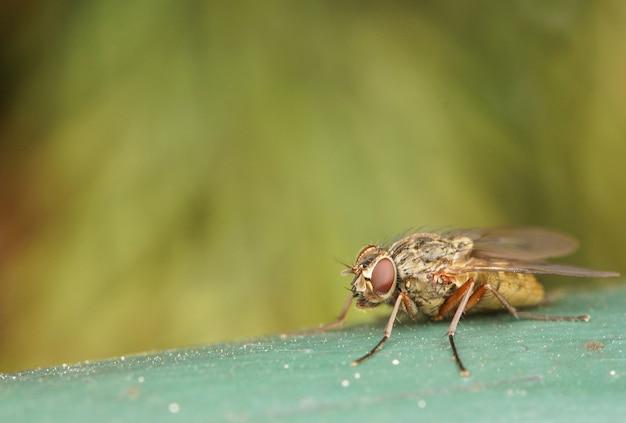 Close-up shot van een vlieg op een groen oppervlak Gratis Foto