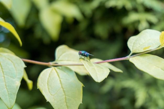 Close-up shot van een vlieg op groene bladeren bedekt met dauwdruppels Gratis Foto