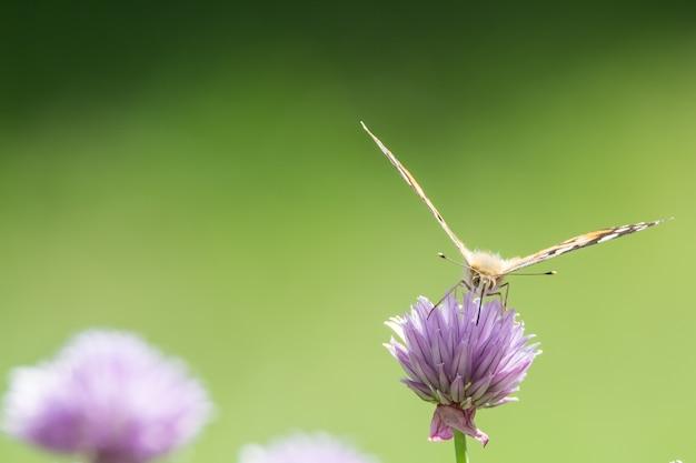Close-up shot van een vlinder zittend op een paarse bloem met een onscherpe achtergrond Gratis Foto