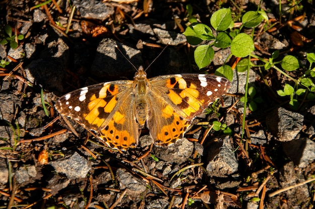 Close-up shot van een vlinder zittend op verschillende kleine rotsen naast een groen blad Gratis Foto