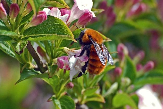 Close-up shot van een vogel insect op een wilde bloem in het bos Gratis Foto