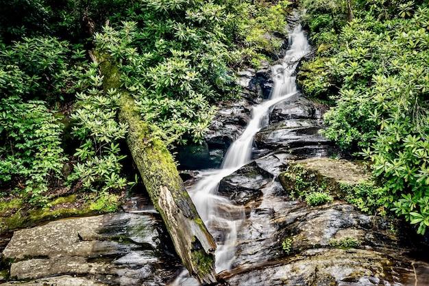 Close-up shot van een waterstroom in het bos omgeven door groen Gratis Foto