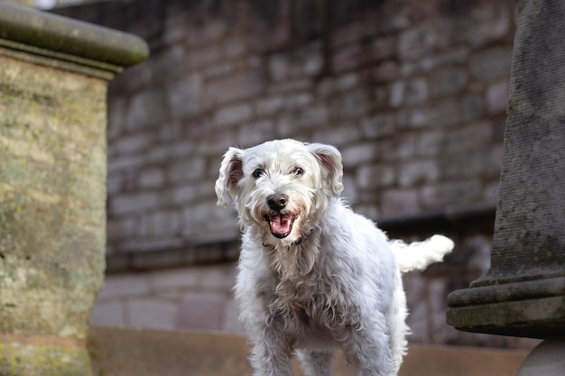 Close-up shot van een witte hond staande voor een muur Gratis Foto
