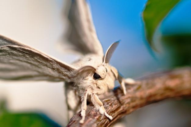 Close-up shot van een witte zijderups met een onscherpe achtergrond Gratis Foto