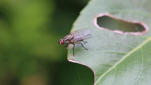 Close-up shot van een zwarte vlieg op een groen blad met een gat erin Gratis Foto