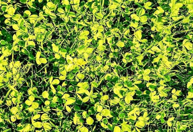 Close-up shot van groen gras op de canarische eilanden Gratis Foto