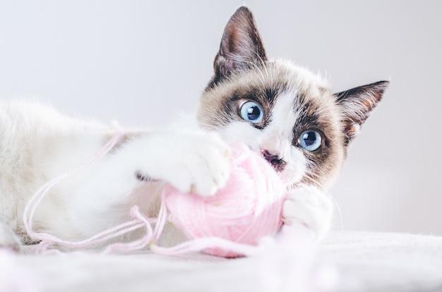 Close-up shot van het bruine en witte gezicht van een schattige blauwogige kat die met een bolletje wol speelt Gratis Foto