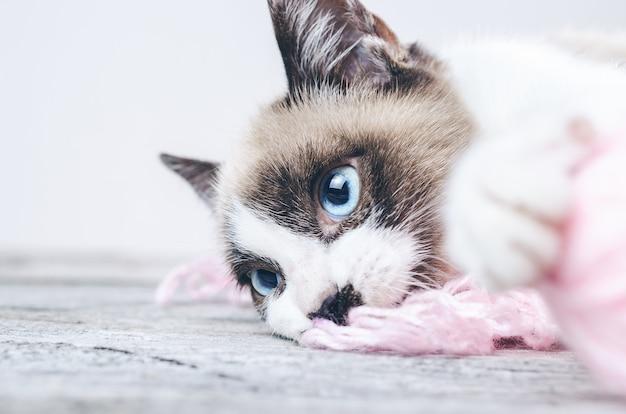 Close-up shot van het bruine en witte gezicht van een schattige blauwogige kat liggend op wollen draden Gratis Foto