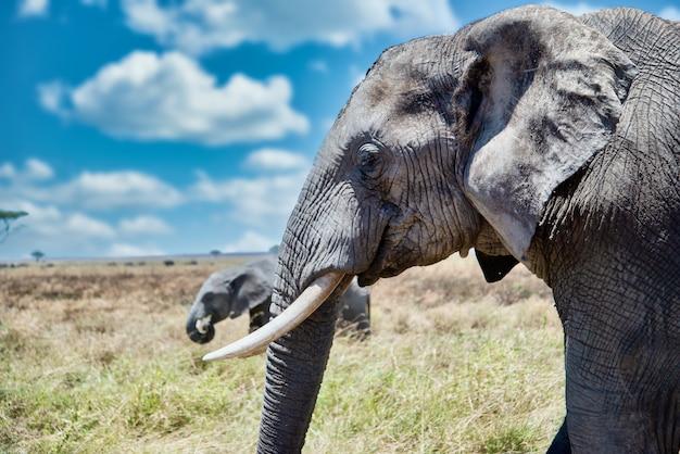 Close-up shot van het hoofd van een schattige olifant in de wildernis Gratis Foto