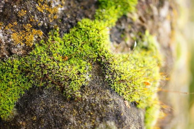 Close-up shot van het mos van het stenen oppervlak Gratis Foto