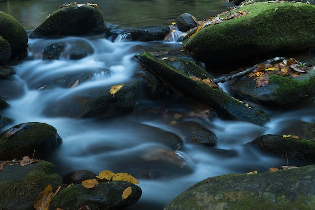 Close-up shot van het schuimende water van de rivier die de bemoste stenen bedekt met gevallen herfstbladeren Gratis Foto
