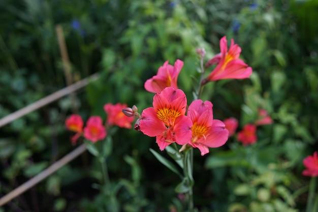 Close-up shot van kleine roze bloemen in een tuin vol met planten op een heldere dag Gratis Foto
