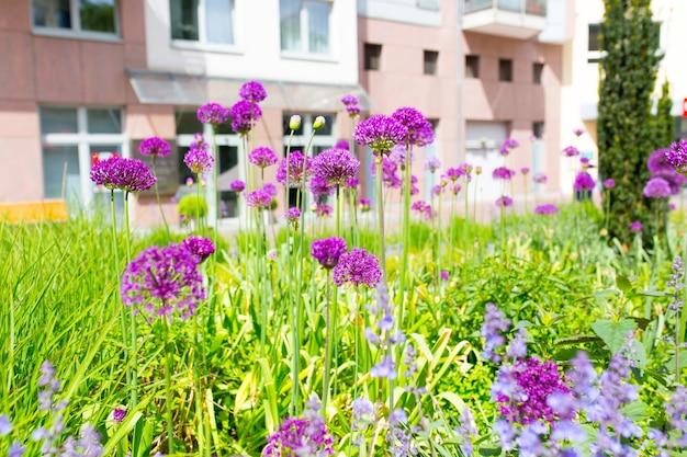 Close-up shot van paarse bloemen en gras in een tuin Gratis Foto