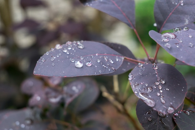 Close-up shot van paarse plant bladeren bedekt met dauwdruppels Gratis Foto