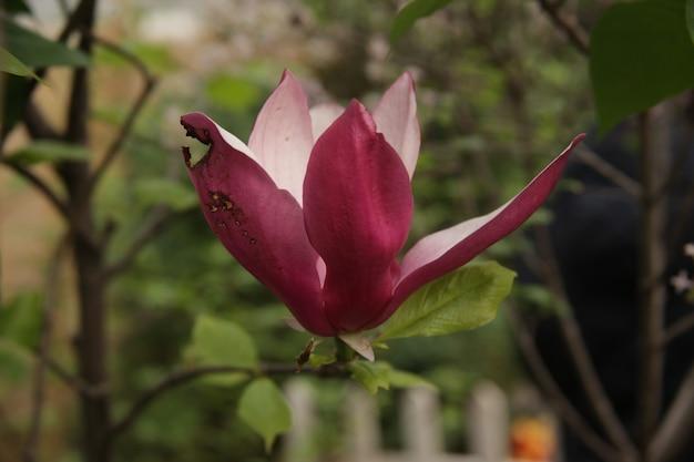 Close-up shot van prachtige paars-petaled iris bloemen in een tuin Gratis Foto