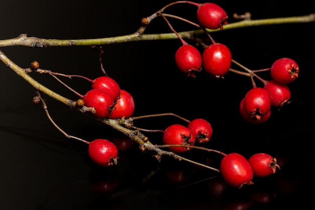 Close-up shot van rode rozebottels groeien op de tak Gratis Foto
