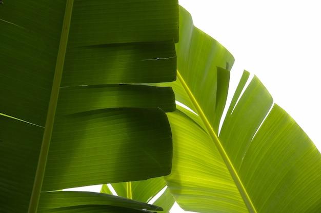 Close-up shot van tropische groene planten met een witte achtergrond Gratis Foto