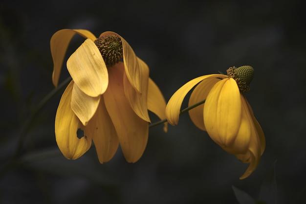 Close-up shot van twee mooie gele bloemen met een onscherpe achtergrond Gratis Foto