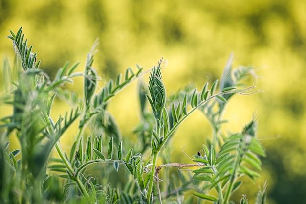 Close-up shot van vers groen gras op een wazig karakter Gratis Foto