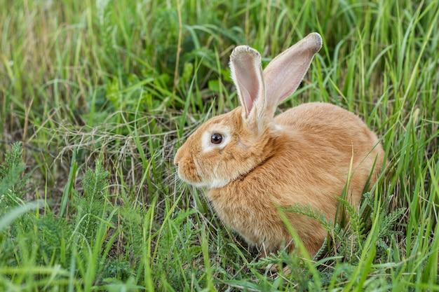 Close-up tam konijn bij landbouwbedrijf Gratis Foto