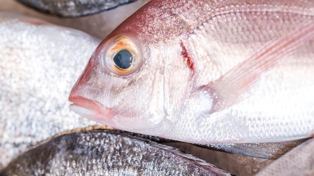 Close-up van bevroren vis in de markt Gratis Foto
