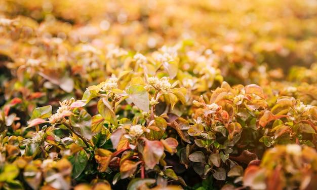 Close-up van bloeiende planten in zonlicht Gratis Foto