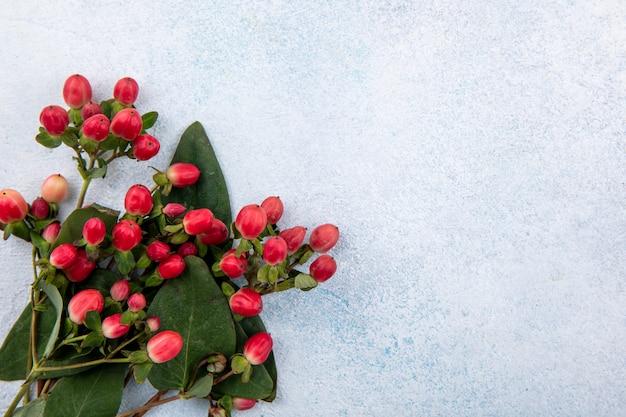 Close-up van bloemen op witte ondergrond Gratis Foto