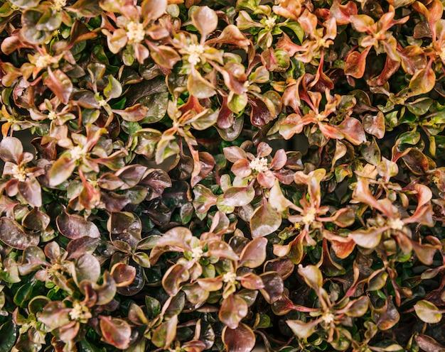 Close-up van bruine verse bladeren met kleine bloemen Gratis Foto
