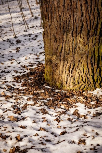 Close-up van de basis van een boomstam omgeven door sneeuw en gevallen bladeren Gratis Foto